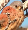 En 2007, un ornithologue découvrait le plus grand rassemblement au […]