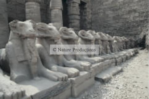 Beliers vallee des reines d'Egypte