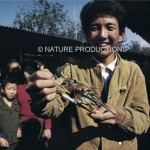 braconnier-montre-oiseau