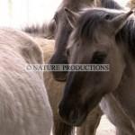 chevaux-gros-plan