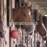 chevaux au box