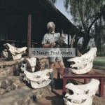 Clive Walker crânes rhinocéros Afrique du Sud