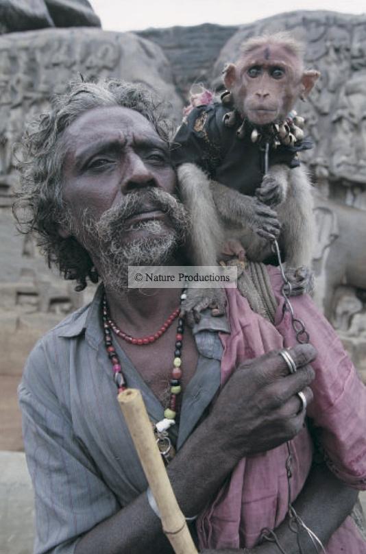 Indien et macaque