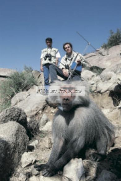 Macaque et hommes