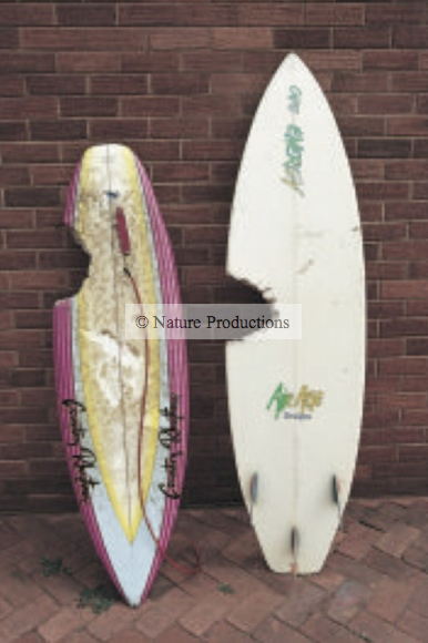 Planches surf requin