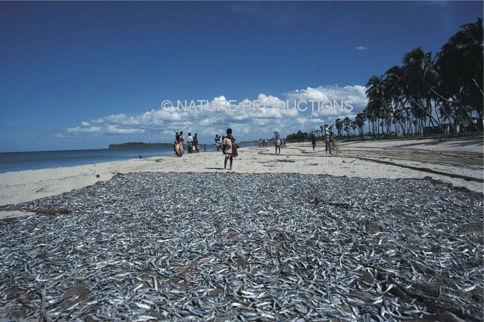 poissons peche Senegal