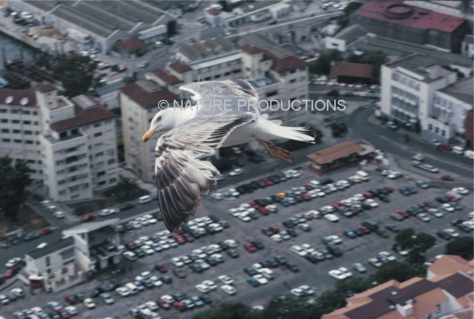 Vol-au-dessus-ville