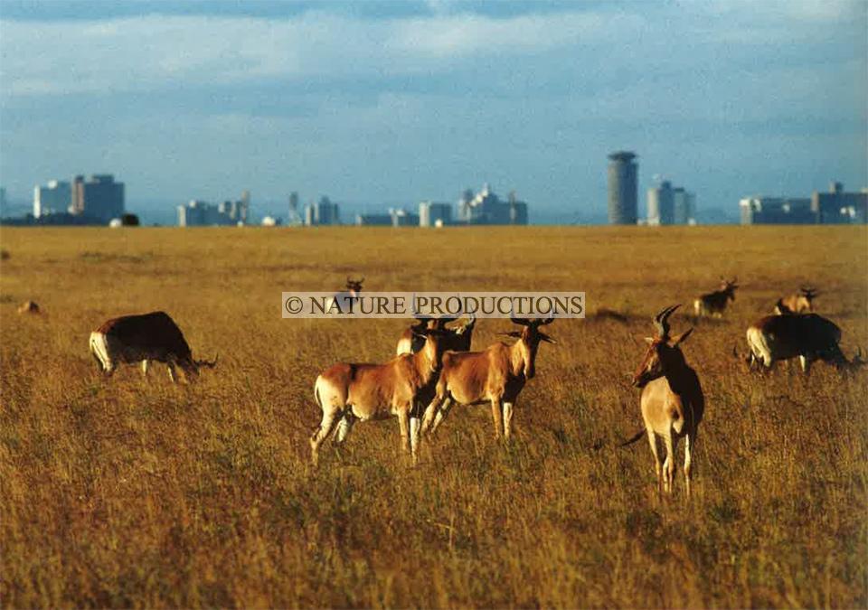 banlieue-Nairobi