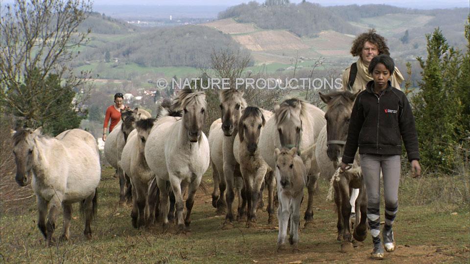 groupe-de-chevaux-avec-jeunes
