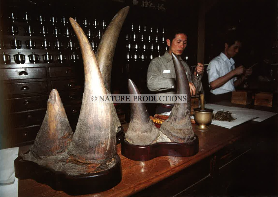 cornes-rhinocéros