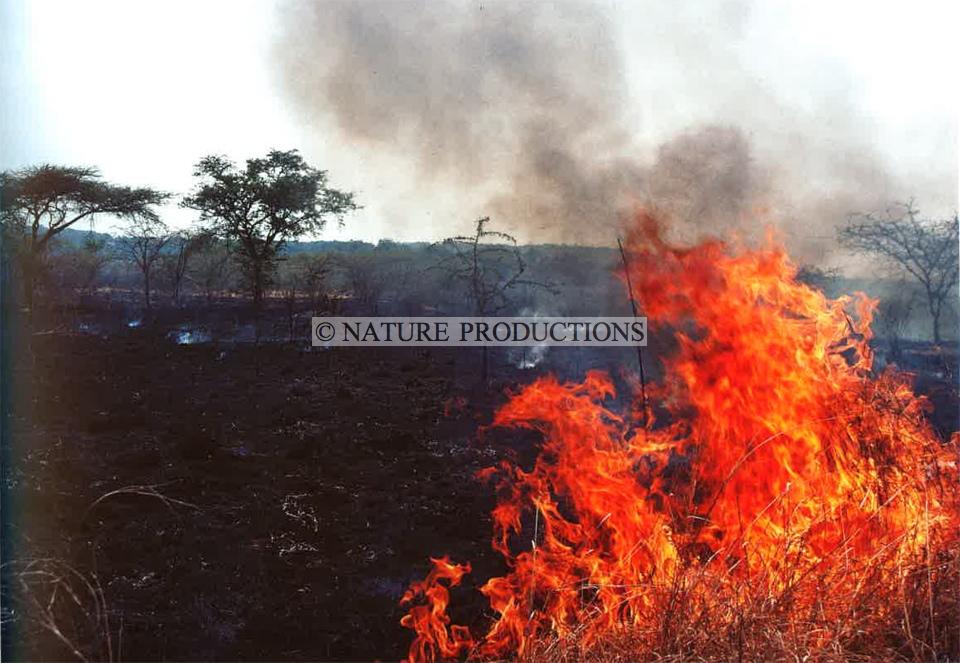 feu-forêt