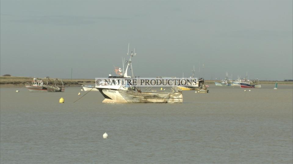 bateaux, marais