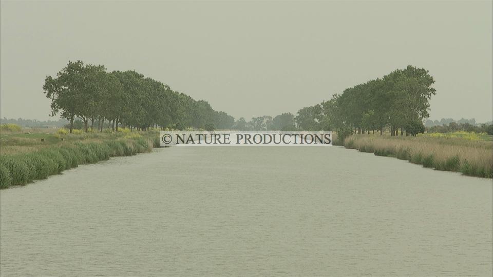 Canal-Marais