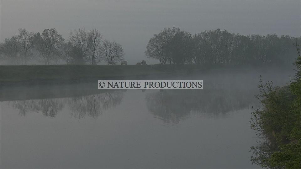 Marais-brume
