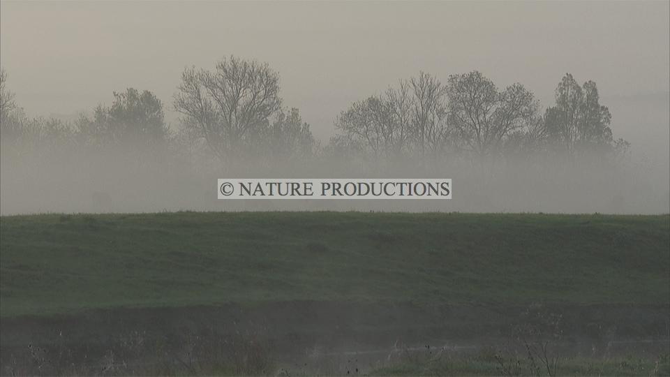 Marais-dans-la-brume