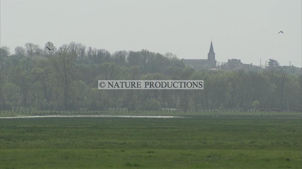 Paysage-Marais poitevin