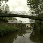 Pont-Marais poitevin
