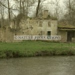 Ruine-Marais poitevin