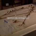 Herbier-Muséum
